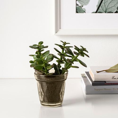 VÄLDOFT vela aromática en vaso