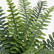 FEJKA planta artificial con maceta, 15cm de diámetro