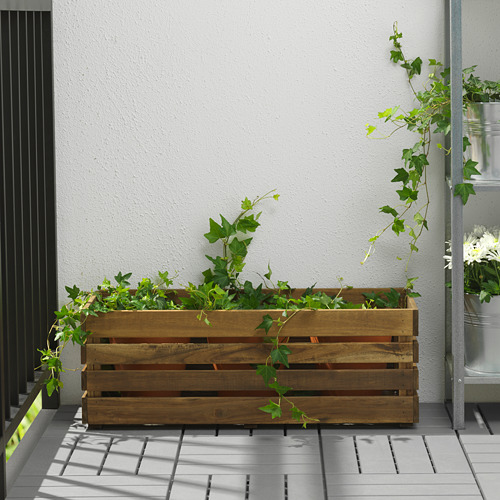 STJÄRNANIS jardinera
