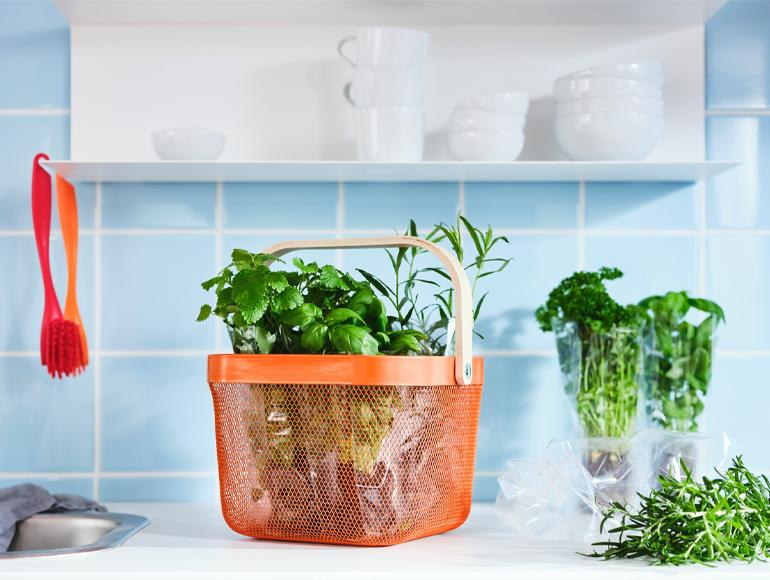 Cultivando sueños en tu cocina